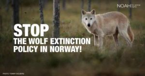 Support NOAH for Norway's Wolves